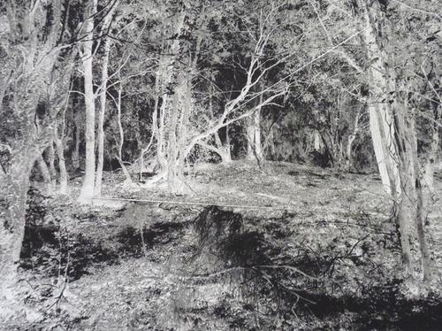 photo de forêt en noir et blanc et fil argenté