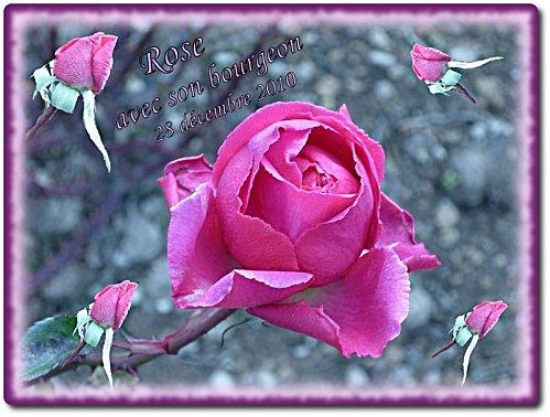 rose-amite.JPG