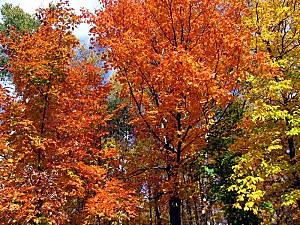 arbres-automne.jpg