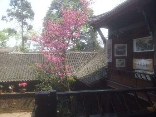 la montagne Qing Cheng Shan, haut lieu du taoisme et du tourisme de masse