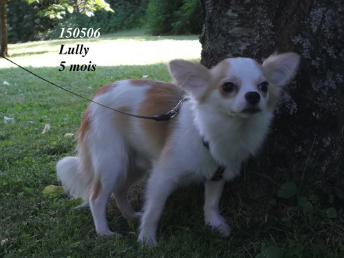 Lully, le copain des aby