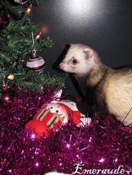 Photo-Furet-Bartok-11.12.24-02