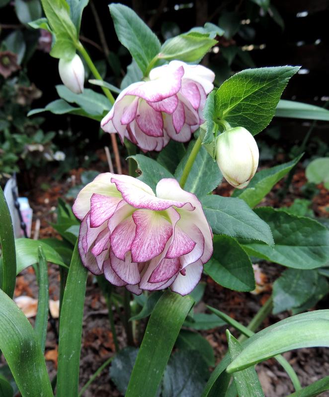 Fleurs d'Avril....