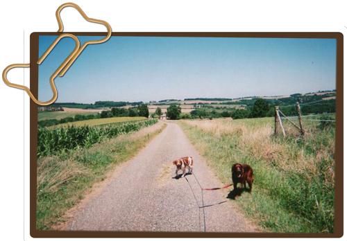 Les chiens et nous ... Avril .