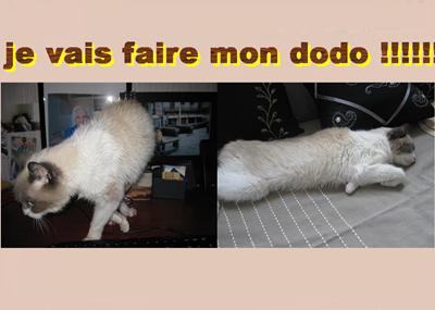 Dodo !!!!!!!