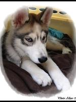 Jasko (2,5 mois)