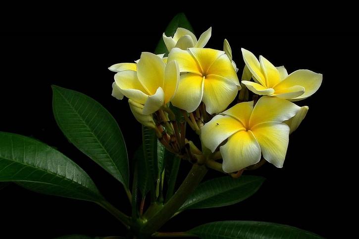 15 Images de fleurs - 2