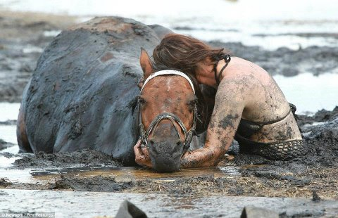 Histoire extraordinaire : rien n'est plus fort que l'amour entre un cheval et son cavalier