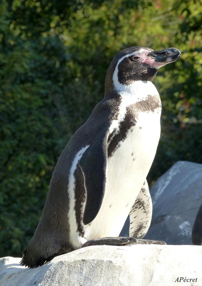 Mes amis du Zoo d'Amiens