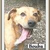 Bouba B 4