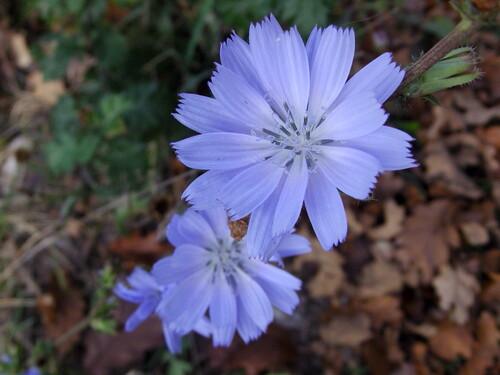 fleur au bord d'un chemin en forêt