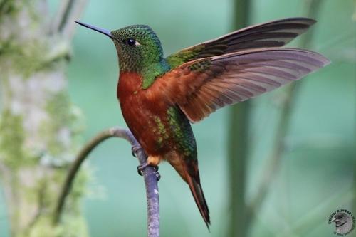 un joli,petit oiseau.....