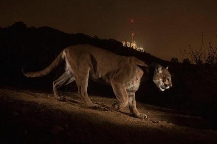 Les nuits sauvages de L.A.