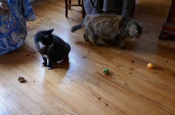 Missions de chat ... ou mission de chats ?