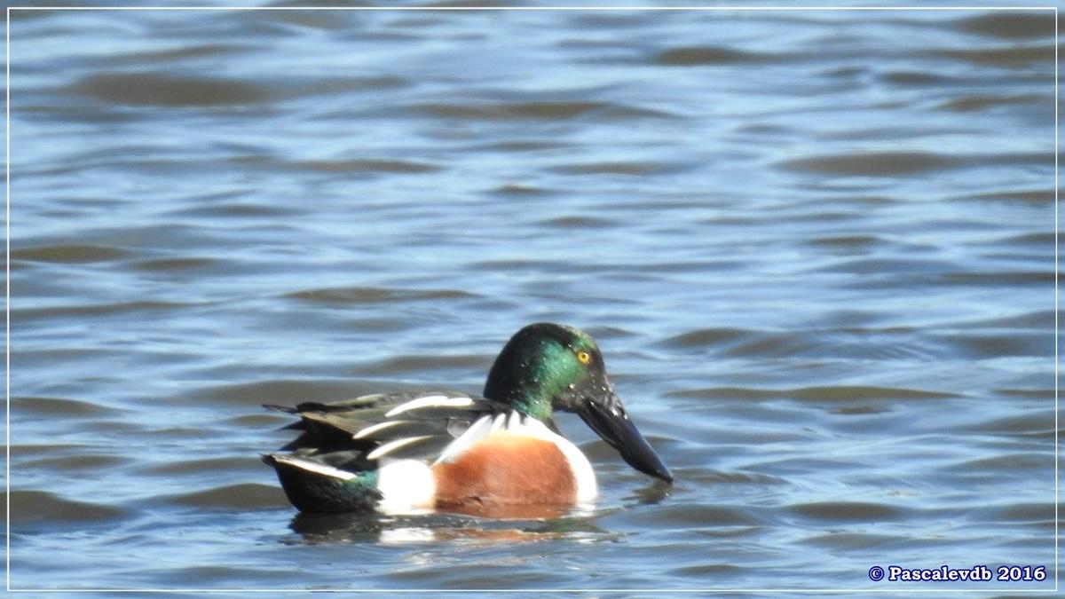 Réserve ornitho du Teich - Décembre 2016 - 2/13