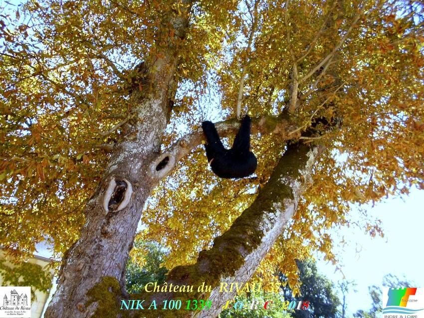 CHÂTEAU & JARDINS DE RIVAU   3/3 - 6/10      D      23/01/2020
