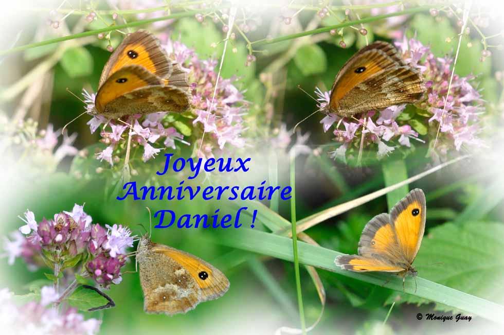 Quarté d'Amaryllis: anniversaire de Daniel