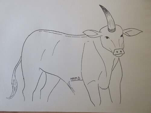 1523: Boeuf unicorne, dagorne (Afrique sub-saharienne)