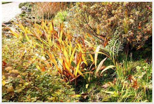 Jardin Alpin. Jardin des Plantes.