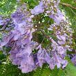 Fleurs de Provence -  Bormes-les-Mimosas