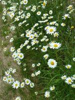 La randonnée du 9 juin à Mouen