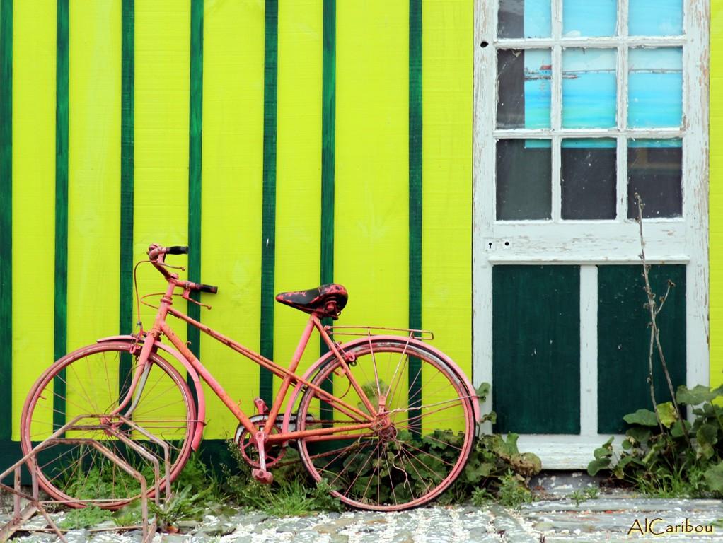 Cycliste parti manger des huîtres...