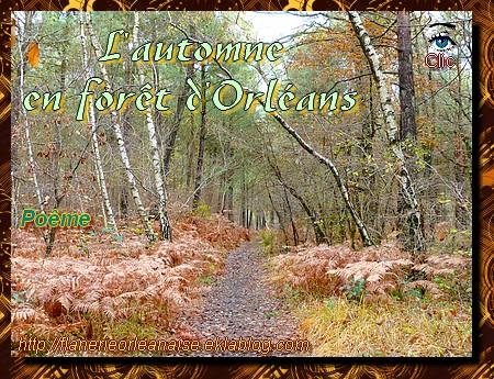L'automne dans la forêt d'Orléans (1/2)
