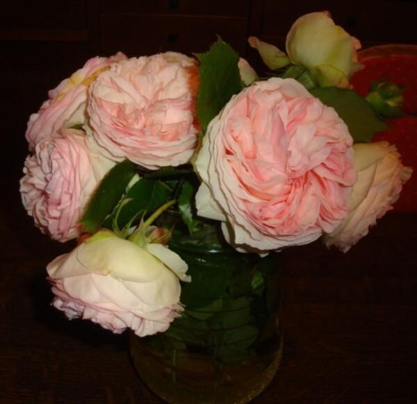 roses-anglaises-2.jpg