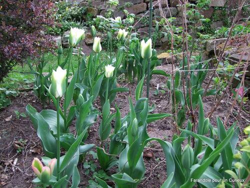 Le jardin au printemps
