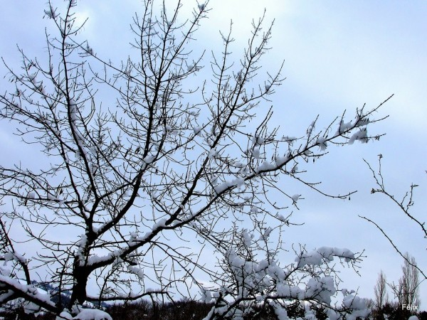 z04---Sous-la-neige.JPG