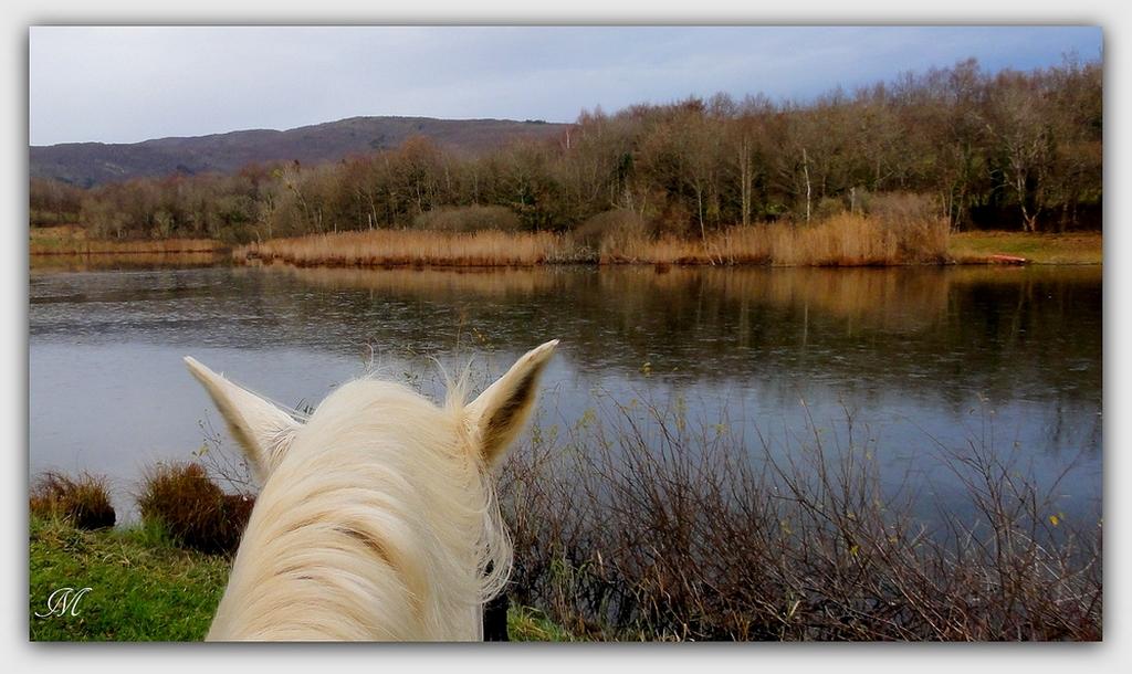 Au bord de l'eau en fin d'automne