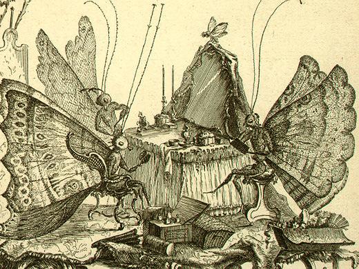 Pimpenicaille, le roi des papillons