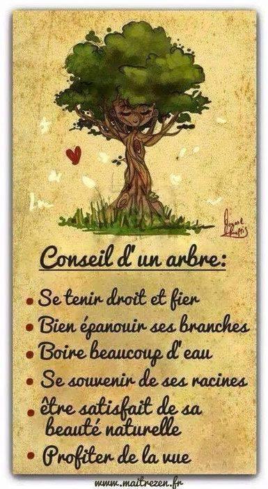 """L'arbre """"Le roi de nos forêts"""" ..."""