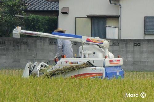 champ de riz 田んぼ