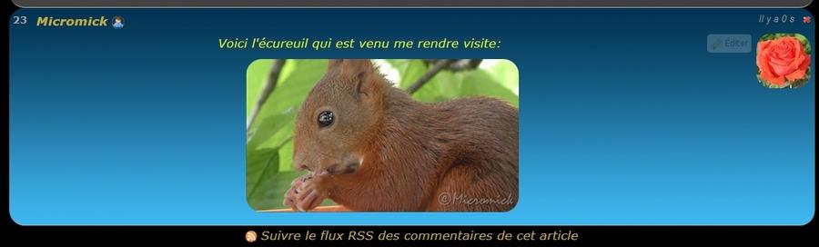 Cliquez sur l'image pour voir la vidéo de l'écureuil.
