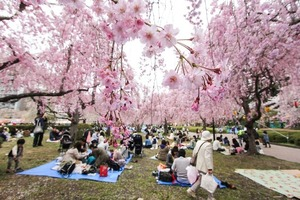 books cherry blossoms sendai park