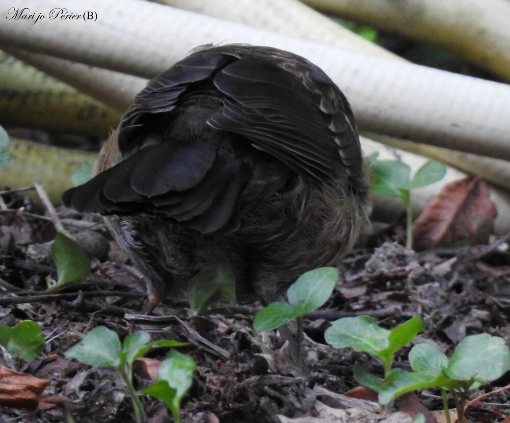 Un p'tit oiseau