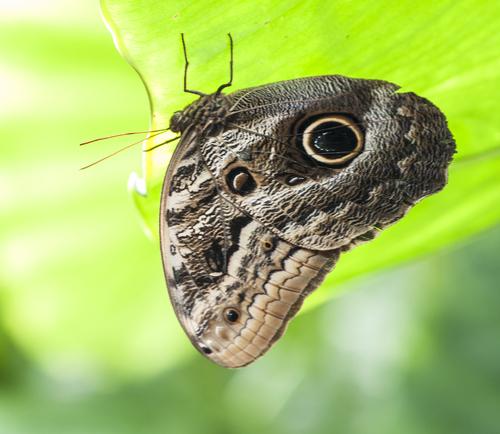 Les papillons sur une île ...
