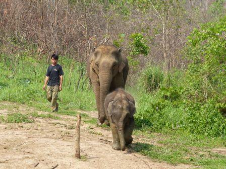 l'Elephant Conservation Center