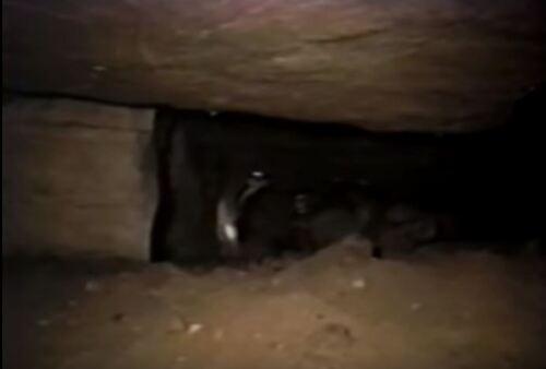La grotte de Los Tayos.