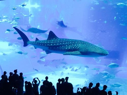 aquarium d'okinawa