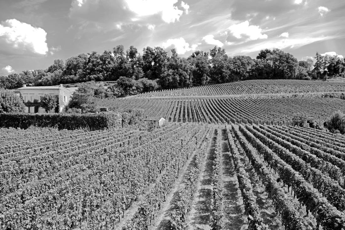 Saint Emilion  Les vignes