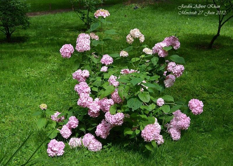 Jardins Albert Kahn : Le Jardin Anglais