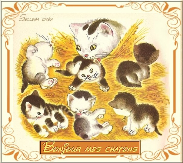 Bonjour mes chatons