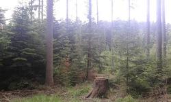 Galerie Photo #3 - Balade en Forêt