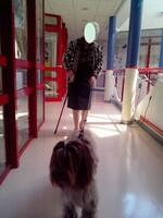 chiens visiteurs