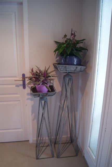 plantes d'appartement : Anthurium violacé Fiorino et Rhoeo