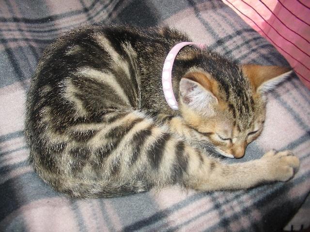 Lina dort sur son lit avec son collier