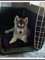 Jaïka (2 mois)