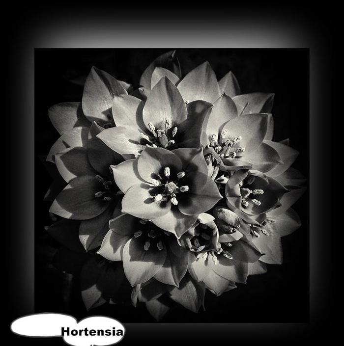 La ronde du noir et blanc